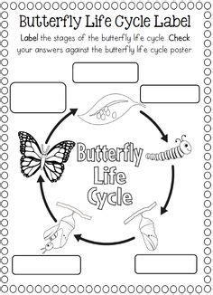 butterfly life cycle clipart black  white clipground