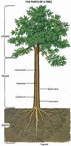 Meet A Tree