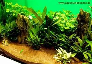 Aquarium Pflanzen Schnellwachsend : m hlan ber 120 aquarium pflanzen in 16 bunde real ~ Frokenaadalensverden.com Haus und Dekorationen