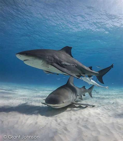 bimini scuba diving conditions  forecast april