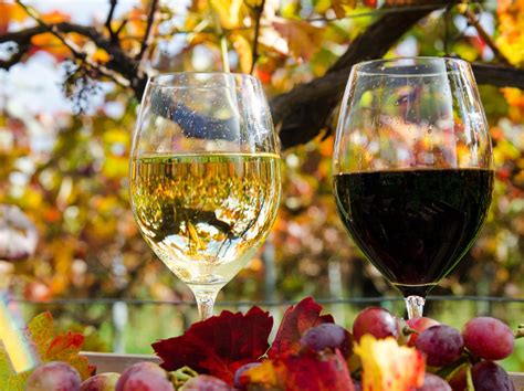 glasses reflection wine white red leaves autumn hd wallpaper