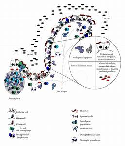 Mucosal Immunity and the Intestinal Microbiome in the ...
