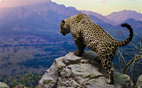 Jaguar Backgrounds by Jaguar Hd Wallpaper Background Image 1920x1200 Id