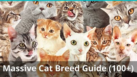 The Ultimate Guide To Different Types Of Cat Breeds (100