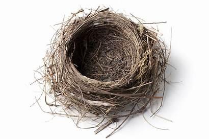 Nest Empty Bird Nido Quotes Uccello Vogelnest