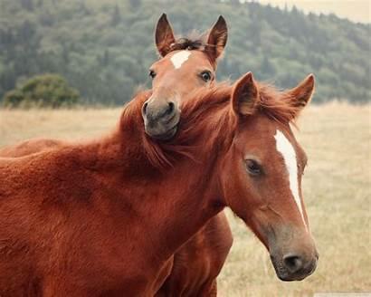 Horse Cute Wallpapers Standard Wallpapertag