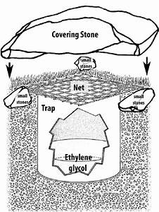 Design Of The Pitfall Traps