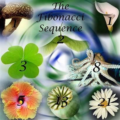Fibonacci Sequence Nature Numbers Examples Fingerprint 10th