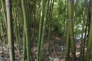 Wie Schnell Wächst Bambus : sichtschutz selber bauen ~ Frokenaadalensverden.com Haus und Dekorationen