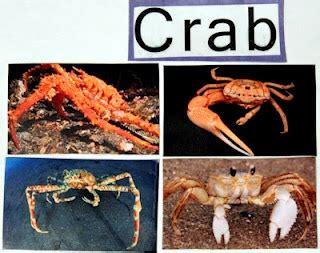 crab crafts diy preschool for an theme free 594 | 232162823e8c301eecfe2d57f1122a95