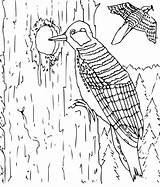Coloring Pages Woodpecker Animal Hard Printable Animals Birds Colouring Tree Bird Kb Kitty Hole Education Another Popular Trunk Formats Coloringpages sketch template