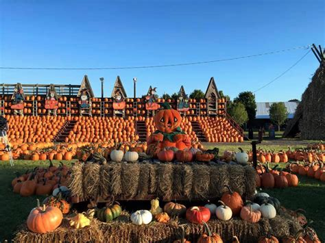 usas  pumpkin patches  visit  fall