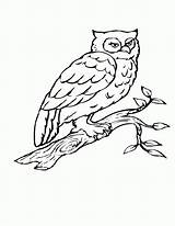 Coloring Owl Bird Pages Tree Birds Flying Drawing Branch Heart Birch Printable Getdrawings Popular Getcolorings Coloringhome sketch template
