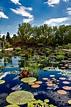 Botanic Gardens in Denver, Colorado image - Free stock ...