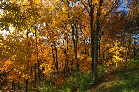 colorful fall woods scene