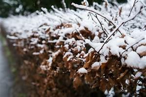 Im Winter Richtig Lüften : hainbuchenhecke im winter so pflegen sie sie richtig ~ Bigdaddyawards.com Haus und Dekorationen