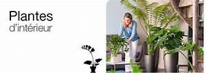 Plante Interieur Haute : vente de plantes int rieures produits pour le jardin jardinerie truffaut ~ Teatrodelosmanantiales.com Idées de Décoration