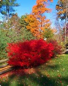 images  central oregon plant tree ideas