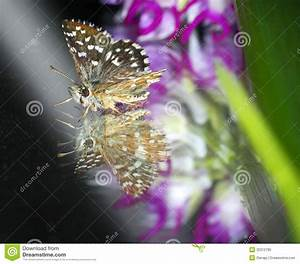 Close Up Butterfly Royalty Free Stock Photo - Image: 32312785
