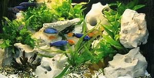 Aquarium Gestaltung Bilder : aufbau aquarium oase ~ Lizthompson.info Haus und Dekorationen