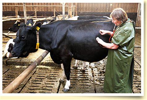 leistungsspektrum der tierarztpraxis eddesse