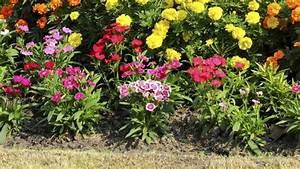 Plantes Amies Et Ennemies Au Potager : plantation avril jardin 10 fleurs et plantes planter ~ Melissatoandfro.com Idées de Décoration