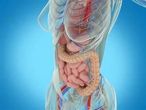 Douleur Milieu Dos Cancer : douleur au c t gauche les organes potentiellement en cause medisite ~ Medecine-chirurgie-esthetiques.com Avis de Voitures