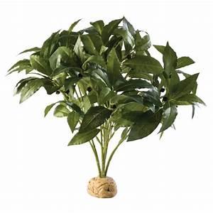 Acheter Terrarium Plante : exoterra plante buisson de laurier pour terrarium ~ Teatrodelosmanantiales.com Idées de Décoration