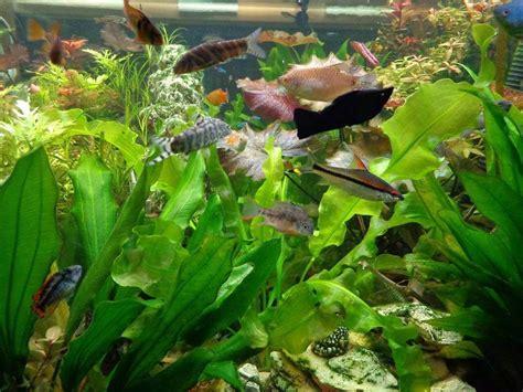 heure eclairage aquarium mon aquarium 1000 litres eau douce forum aquarium
