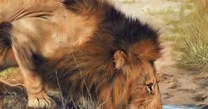Im U00e1genes Arte Pinturas  Un Mundo Salvaje  Pinturas De Animales