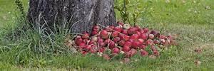 Garten Im September : garten im september tipps tricks vom g rtner garten und gr nanlagen ~ Whattoseeinmadrid.com Haus und Dekorationen