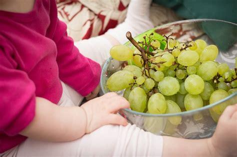 coltivare uva da tavola come coltivare l uva da tavola idee green