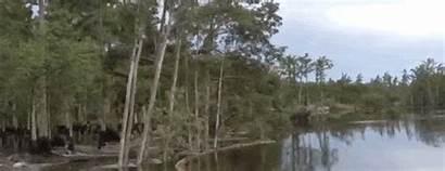 Louisiana Sinkhole Trees Swallows Hollywood Fl