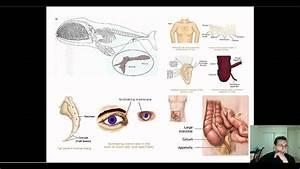 Evidence of Evolution (Part 3): Anatomy - Vestigial ...  Vestigial