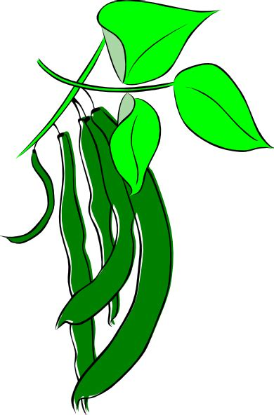 Green Beans Clipart Runner Bean Clip At Clker Vector Clip