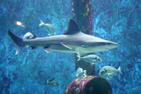 adresse aquarium de lyon 28 images aquarium de lyon wikip 233 dia aquarium de lyon activit