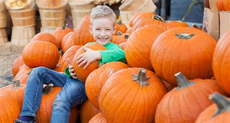 Pumpkin Patch St Louis Mo by Pumpkin Patch Saint Louis Bittorrentper