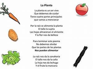 Poema : La Planta
