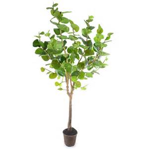 indoor trees welcome new post has been published on kalkunta com