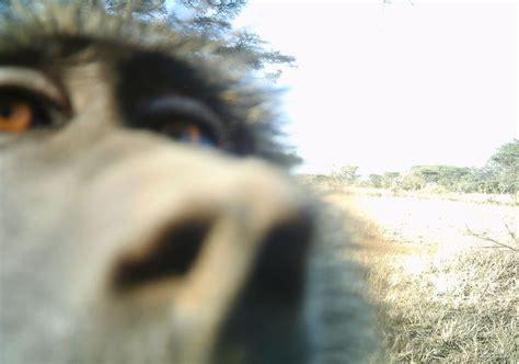 animal selfies  everyday situations