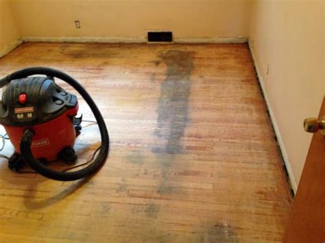 Urine On Engineered Hardwood Floors by Urine Soaked Hardwood Rip Up Or Kilz To Cover With