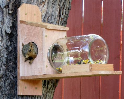 squirrel feeder box woodworking projects plans