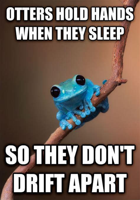 Fact Frog Meme - small fact frog know your meme
