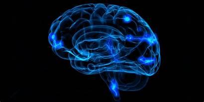 Brain Rewire Success Root Science