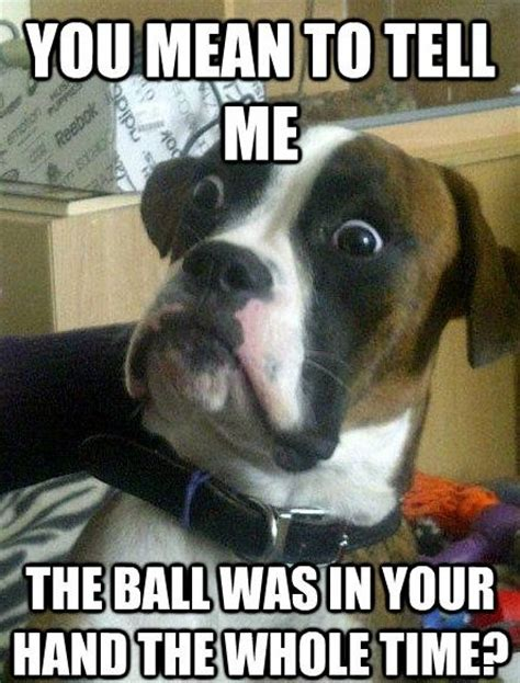 33 All Time Best Funny Dog Pictures with Captions