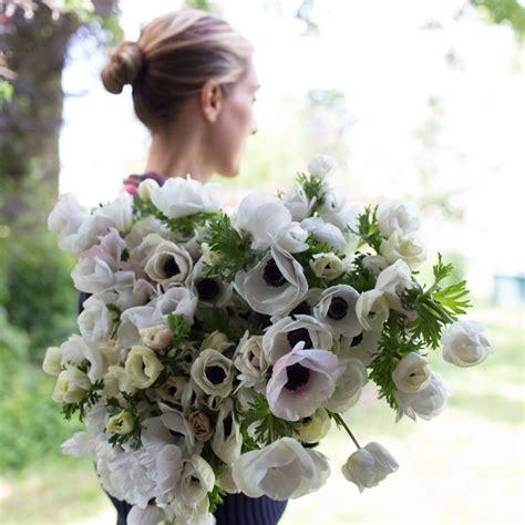 anemone black white floret flowers
