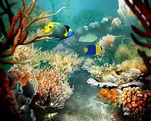Sea Life Wallpaper and Background Image | 1280x1024 | ID ...