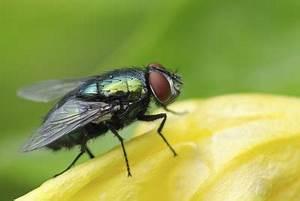 Maden Im Müll : fliegenpuppen richtig beseitigen so geht 39 s ~ Markanthonyermac.com Haus und Dekorationen