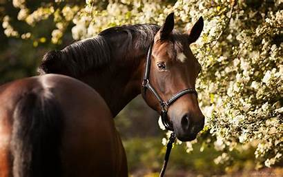 Horse Desktop Brown Resolution 2880 1800 Nature
