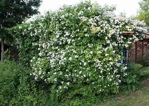 Weiße Steine Garten : garten 2010 ~ Lizthompson.info Haus und Dekorationen